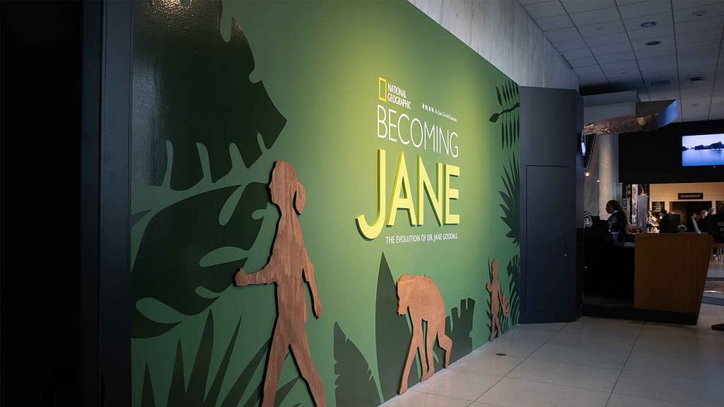 National Geographic Museum Jane Goodall exhibition