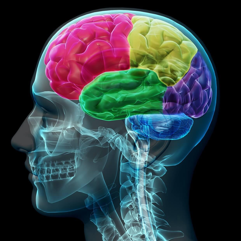 Brain neurons firing during experiences