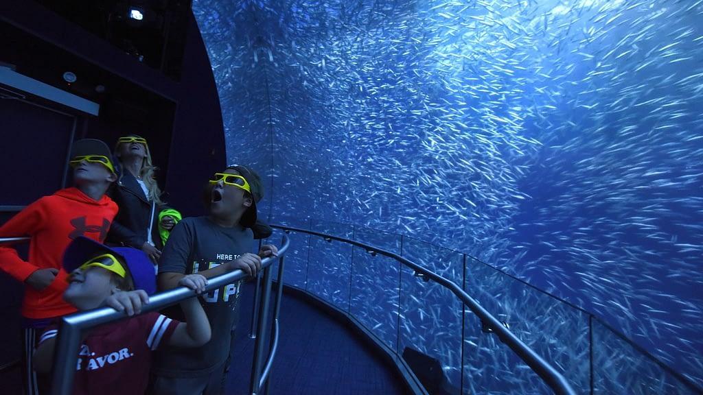 Virtual Aquarium Experience