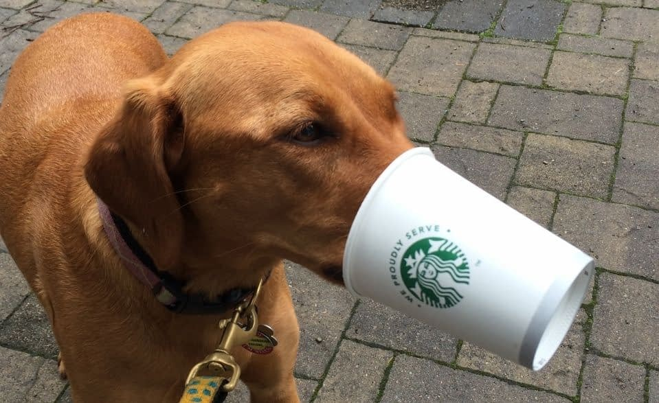 Dog with puppuccino